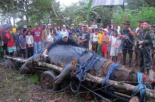 引用 : http://metro.co.uk/2013/02/11/gallery-worlds-largest-captive-crocodile-lolong-dies-at-conservation-park-2013-3401632/