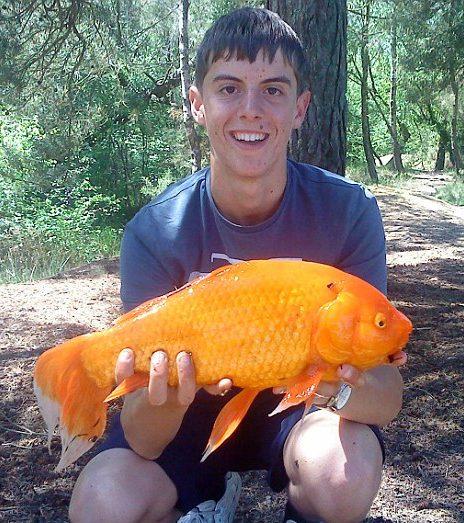 引用 : http://www.dailymail.co.uk/news/article-1294594/Schoolboy-angler-reels-enormous-5lb-GOLDFISH.html