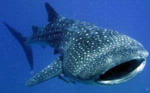 引用 : http://whale-shark.etc64.com/