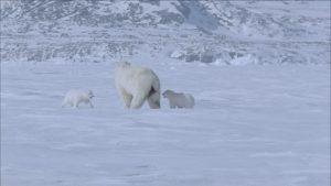 引用 : http://footage.framepool.com/de/shot/224979064-eisbaer-eiswueste-tierfamilie-arktis