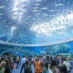 面積20.7k㎡!? 世界一大きい水族館 長隆海洋王国