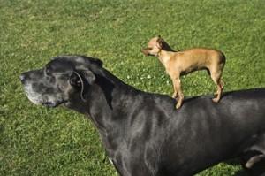 世界で一番小さい犬