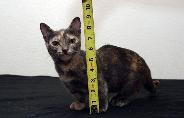 世界一小さい猫5