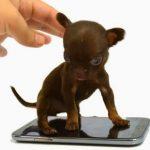 体長15cm!? 世界一小さい犬とは? ギネス記録