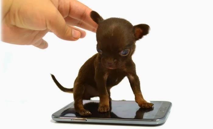 世界最小の犬1