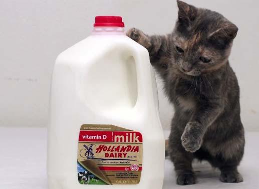 世界一小さい猫1