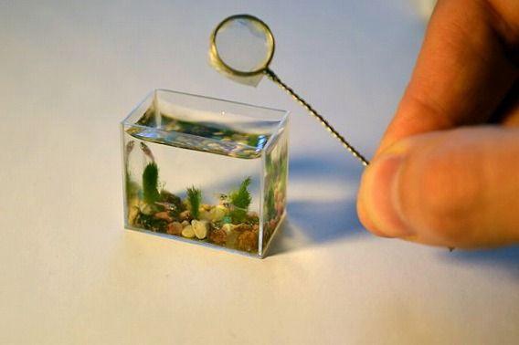 世界一小さい魚 ドワーフ・フェアリー・ミノー1