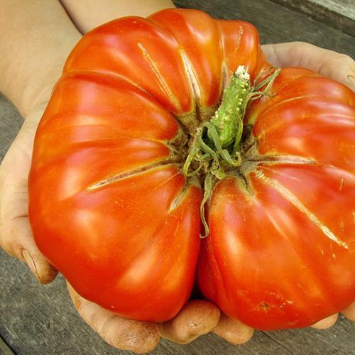 世界一甘いトマト1
